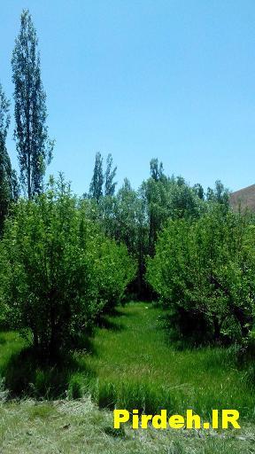 باغ روستا پیرده