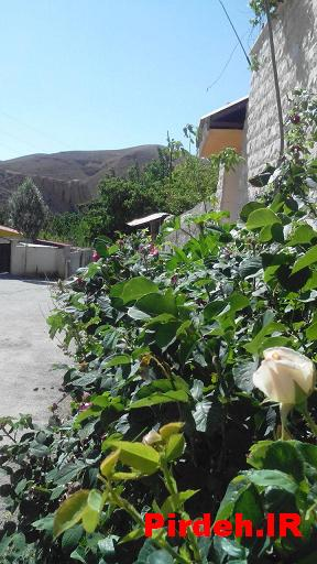 نمایی از داخل روستا